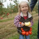 15.09.2012 Dzień Ziemniaka